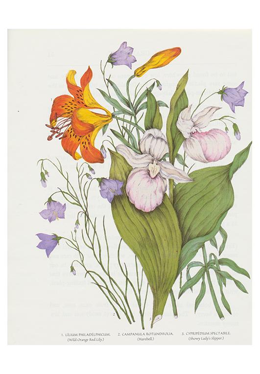 flower 1 1