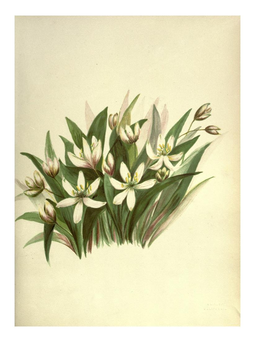 pacificplants 25